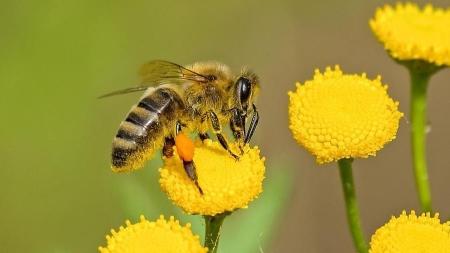 Oggi la giornata mondiale delle api. Il nostro appello con l'esperto: 'Salviamole per salvare l'ecosistema'